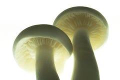близкий гриб вверх Стоковые Фото