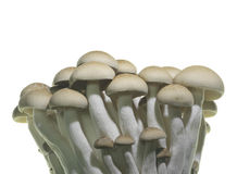близкий гриб вверх Стоковые Фотографии RF