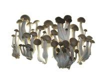 близкий гриб вверх Стоковые Изображения