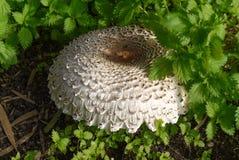 близкий гриб вверх Стоковое Изображение