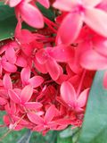 Близкий захват красивого красного цветка Стоковое Фото
