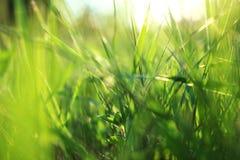 близкий зеленый цвет травы вверх Стоковые Изображения RF