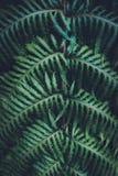 близкий папоротник вверх стоковое фото rf