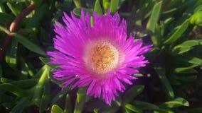 близкий пинк цветка вверх Стоковые Фото