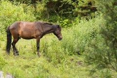 близкий подавая лужок лошади вверх Стоковое Изображение