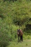 близкий подавая лужок лошади вверх Стоковые Фотографии RF