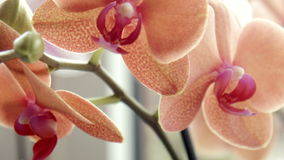 Близкий снимок орхидеи акции видеоматериалы