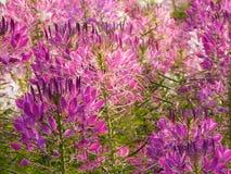 близкий цветок вверх Стоковое Фото