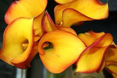 близкий цветок вверх Стоковая Фотография
