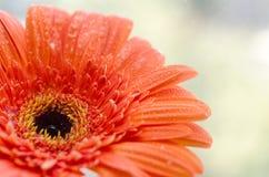 близкий цветок вверх Стоковое Изображение RF