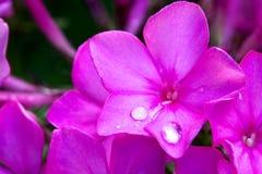 Близкий цветок Стоковая Фотография RF