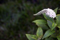Близкий цветок 3 Стоковая Фотография