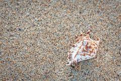 близкий seashell песка вверх Стоковые Фотографии RF