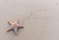 близкий seashell песка вверх Стоковые Изображения RF