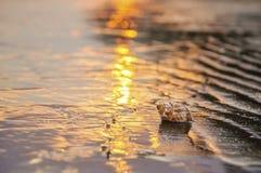близкий seashell песка вверх Стоковая Фотография