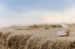 близкий seashell песка вверх Стоковое Изображение RF