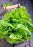 близкое поднимающее вверх салата листьев дня солнечное Стоковое фото RF