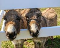 близнецы Стоковая Фотография