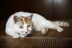 бдительный кот Стоковая Фотография RF