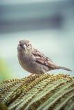 Бдительная птица Стоковые Изображения