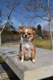 бдительная собака Стоковые Изображения RF