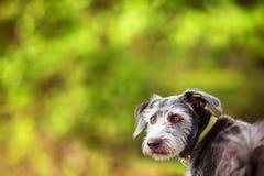 Бдительное дерево Copyspace зеленого цвета собаки терьера Стоковая Фотография