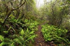 Бдительность пункта, национальный парк Новой Англии, AU Стоковое фото RF