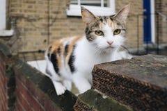 Бдительный сельский кот Стоковое Изображение RF