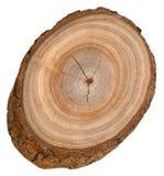 Блок дерева камфоры Стоковое Изображение RF