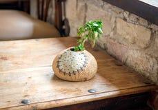 Ваза бейсбола с одиночным зеленым растением на деревянном столе Стоковые Фотографии RF