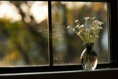 Ваза заполненная цветком на Windowsill стоковое фото