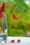 ваза клубник Стоковая Фотография RF
