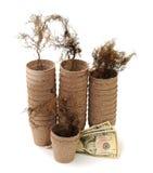 Ваза, корень и деньги коробки Стоковое фото RF