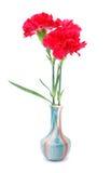 ваза красного цвета гвоздики стоковая фотография rf