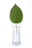 ваза листа стоковая фотография rf