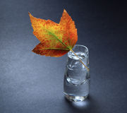 ваза листьев осени Стоковое Фото