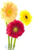 ваза маргариток Стоковые Изображения RF