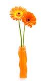 ваза померанца gerber Стоковые Фотографии RF