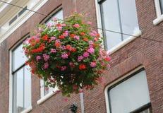 Ваза розовых и красных гераниумов вися потоком над дорогой i Стоковая Фотография