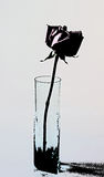 ваза розы стекла одиночная Стоковое фото RF