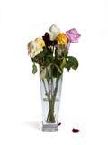 ваза роз завяла Стоковое Фото