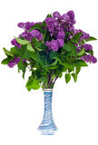 ваза сирени стоковая фотография