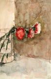 ваза стекла гвоздик Стоковое Фото