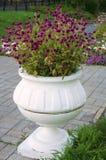 Ваза с фиолетовыми цветками! Стоковые Фото