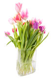 ваза тюльпана Стоковые Изображения