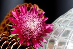 ваза цветка стеклянными текстурированная pinecones стоковая фотография rf