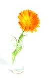 ваза цветка Стоковая Фотография