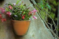 Ваза цветков повиснула на стене, воодушевляя безмятежности и peac Стоковое Изображение