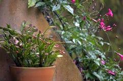 Ваза цветков повиснула на стене, воодушевляя безмятежности и peac Стоковые Фотографии RF