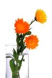 ваза цветков Стоковое Изображение RF